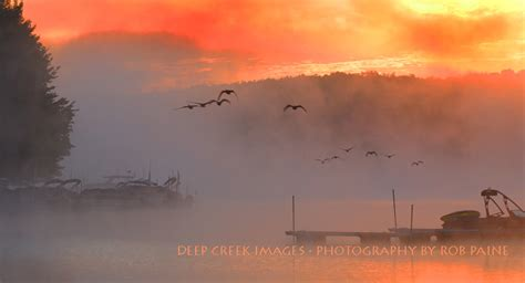 by dawns early light taking flight by dawn s early light at deep creek lake i