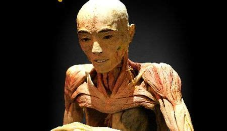 human bodies entradas ofertas para comprar entradas de la exposici 243 n human bodies