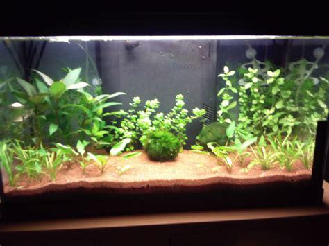 Mon Aquarium 54l Communautaire Mon Aquarium 54 L Refait