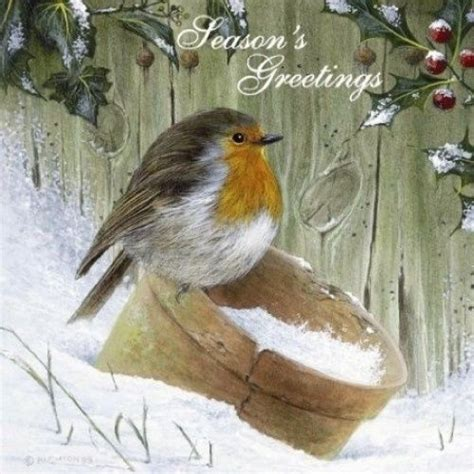 donation as a christmas gift birds 1000 images about robins on bridgewater cross stitch and bird