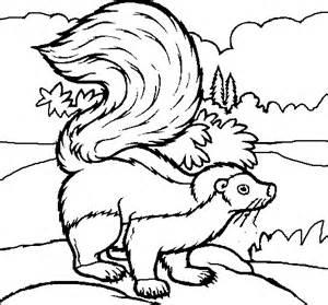 skunk coloring