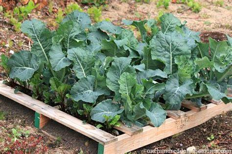 10 Pallet Vegetable Garden Ideas Pallets Designs Pallet Vegetable Garden