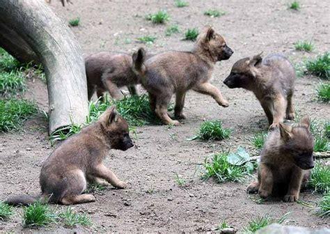 Zoologischer Garten Magdeburg Zooallee Magdeburg by Zoologischer Garten Ottokar