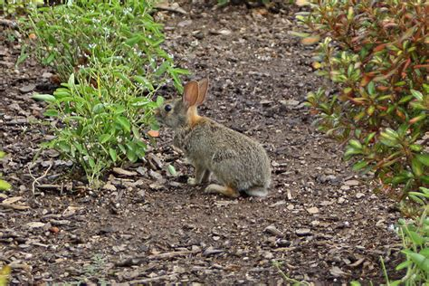 garden animal pests animal rabbits shunkes pests animal
