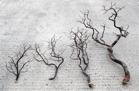 decorative manzanita branch just artificial