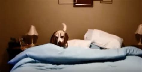 Homeowner Records Owner Records S Sleep Ritual Laughs Out Loud When He