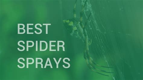 spider sprays insect