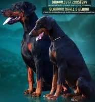 doberman puppies for sale in tn search locally for doberman pinscher puppies and dogs nearest you freedoglistings