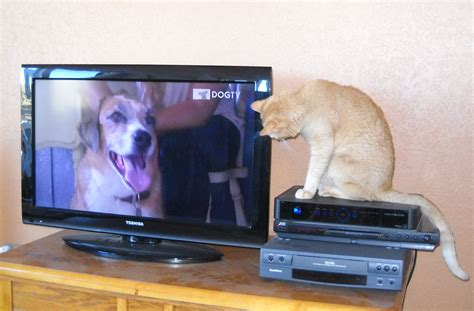 puppy tv does your cat like to the tv channel sleeping dogs cats city data