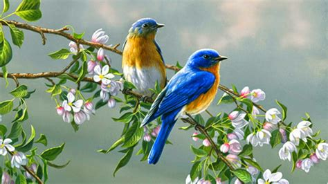 free download images of love birds amazing wallpapers cute little love birds free download wallpaper for pc