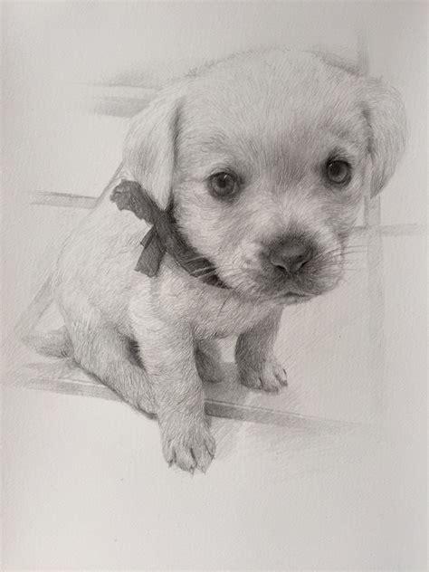 imagenes a lapiz de perritos dibujos de perros a lapiz awesome dibujos a lpiz paso a