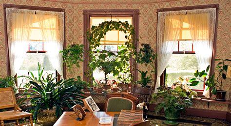 piante per appartamento piante da appartamento curarle in inverno fai da te in
