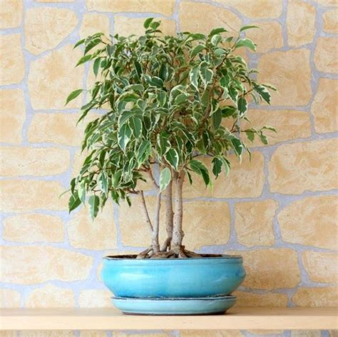 Indoor Plants For Home by 20 Air Purifying Plants For Your Interior