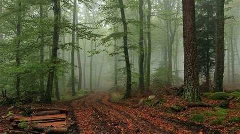 le wald foggy forest wallpapers hd pixelstalk net