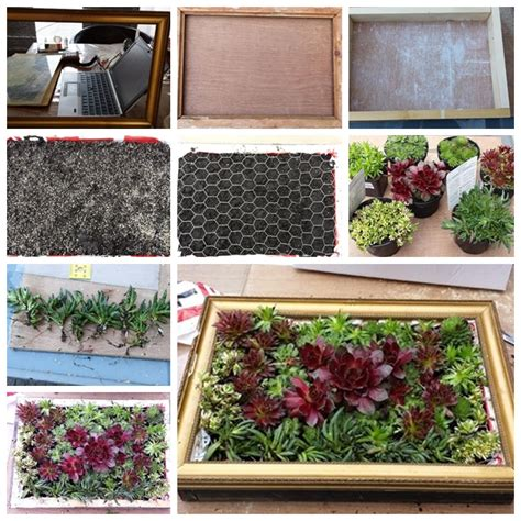 living picture wonderful diy a living succulent picture