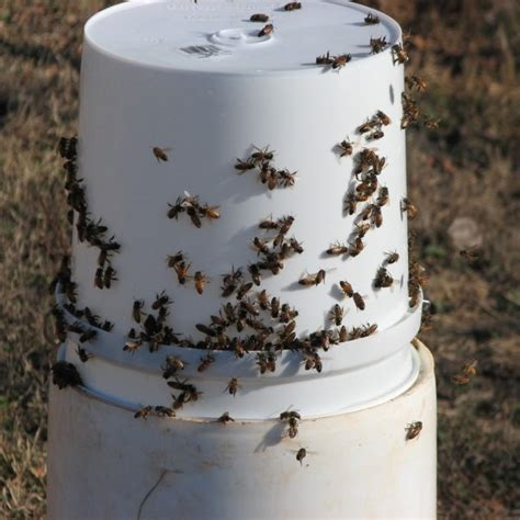 bee feeding stations keeping backyard bees