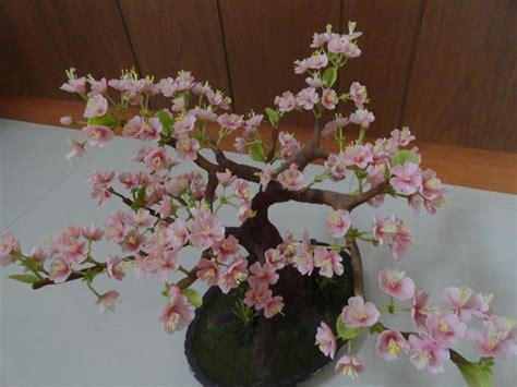 fiori di bacche a cosa servono bonsai ciliegio curare bonsai cura ciliegio bonsai