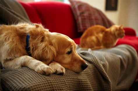 housing requirements for dogs emotional support animal requirements