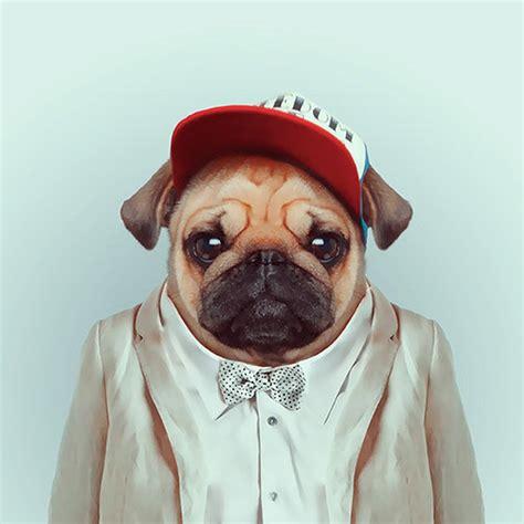 pug fashion links we