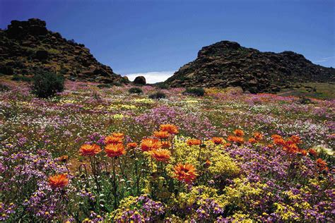 Table Mountain South Africa by South Africa In Africa Thousand Wonders