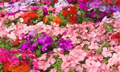Flower Seed Mats by Pre Order Perennial Seed Mats Groupon Goods