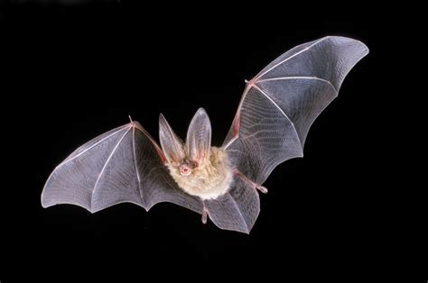 31 march 2016 bats in beds by dr gill clough sadars