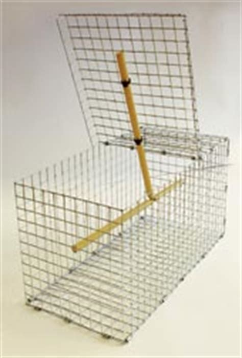House Sparrow Trap Plans Image Gallery Sparrow Traps