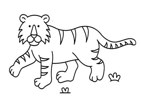 imagenes para dibujar tigres dibujos de tigre para colorear