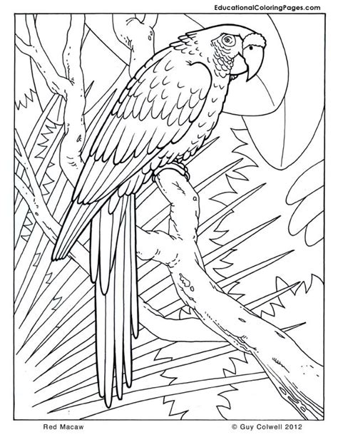 the coloring book for cool who animals books macaw coloring pages animal coloring pages for