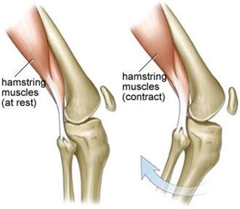 quadricep tattoo pain knee muscle anatomy diagram hamstrings image credit