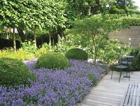 Lavender Garden Ideas Mass Of Lavender And Box Balls Jinny Bloom Planting Inspirations Gardens
