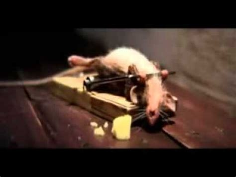 eye of the tiger mouse commercial lustige maus werbespot youtube