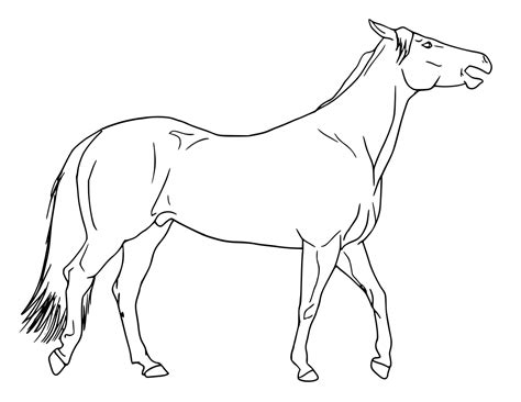 horse walking open mouth sketch animals h horses horse