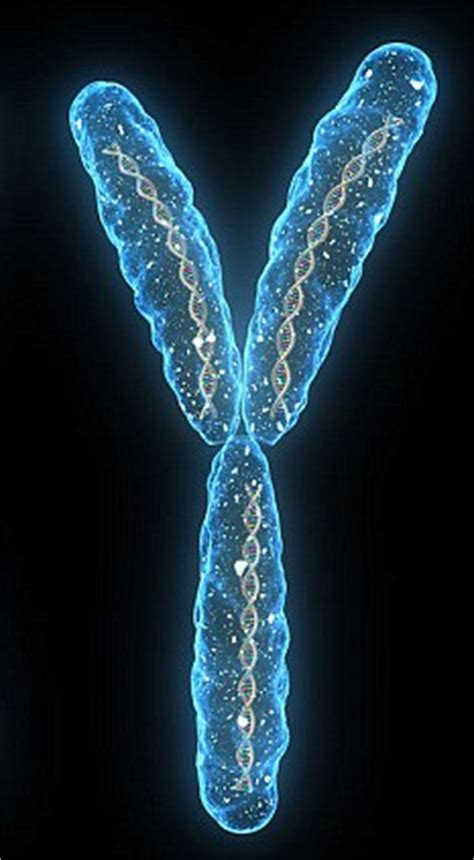 Men AREN'T going to die out: The male Y chromosome is here ... Y Chromosome
