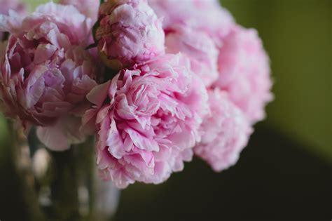diy flower arrangement peonies 3 ways diy pink peony centerpiece project wedding