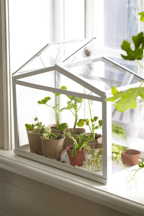 socker greenhouse piccole serre da casa refresh