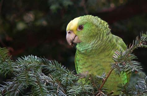 vogel garagen feuerbach vogel die wilden papageien cannstatt bad