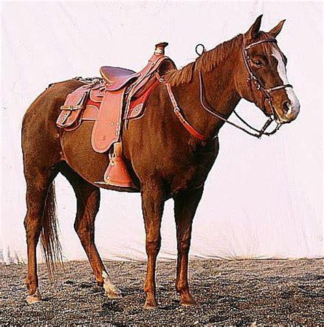 horse saddle naturally horses buying my first saddle