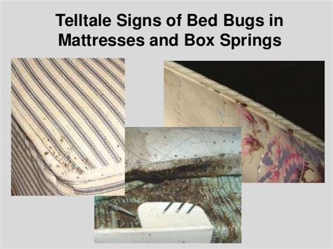 dealing with bed bugs dealing w bed bugs