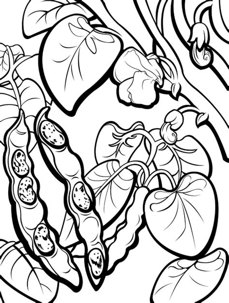 beans beans coloring pages