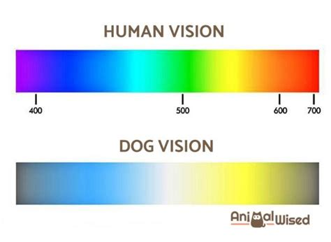 how do dogs see color what colors can dogs see find out here