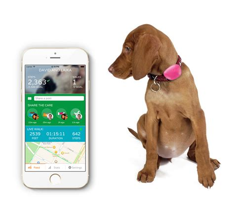 for dogs app hachiko app monitors activity meals technology news
