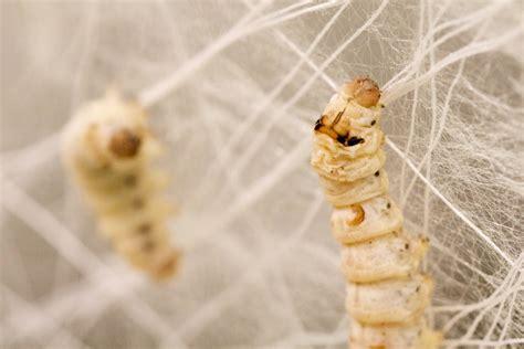 Thread Of The Silkworm silk pavillion cnc deposited silk silkworm