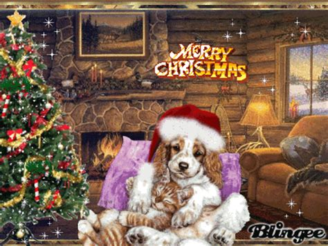 merry christmas cat  dog picture  blingeecom