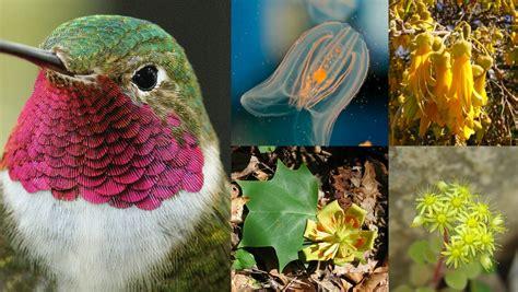 Imagenes De Animales Y Plantas De Mexico | ubica cientos de plantas y animales de m 233 xico con esta app