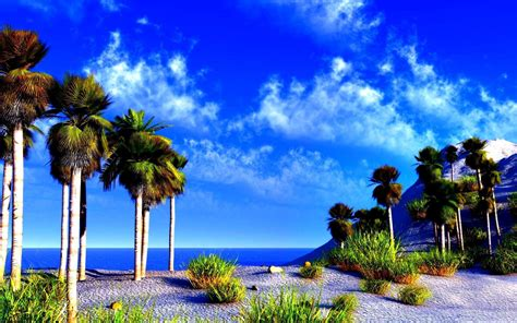 the most beatiful palm avenue palm tree desktop wallpapers wallpaper cave