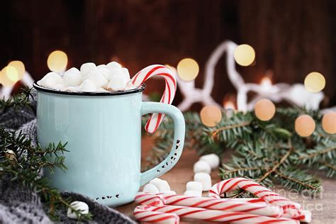 hot cocoa  marshmallows  candy canes photograph