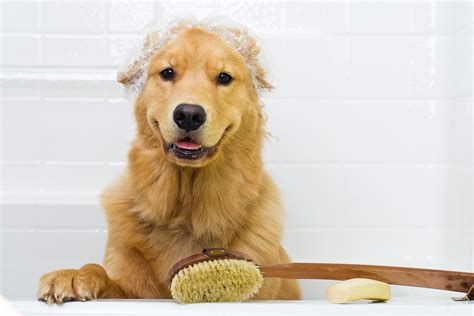 petco do it yourself wash pets grooming prices view pet service prices for grooming and basic vaccinations