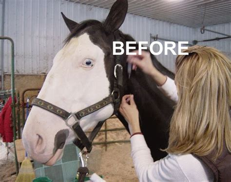 eye tattoo for horses what the muck is that eyeliner tattoos for horses