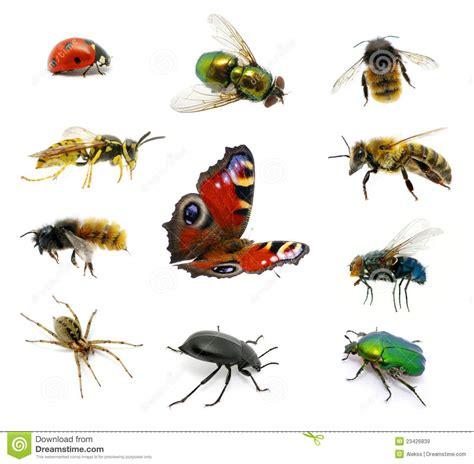 imágenes de animales insectívoros conjunto de insectos imagen de archivo imagen de conjunto